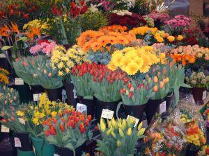 kwiaty w kwiaciarni
